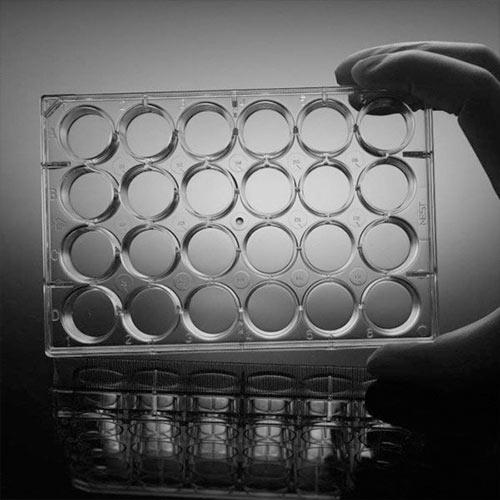 پلیت آزمایشگاه