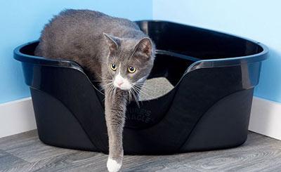 گربه خطرآفرین ترین عامل توکسوپلاسموز