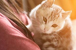 بیماری گربه | توکسوپلاسما