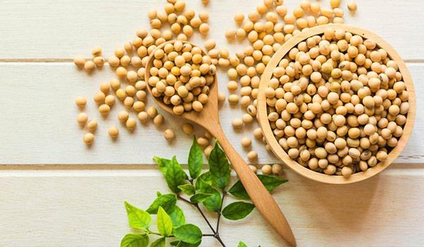 سویا دانه مفید برای درمان فقر آهن